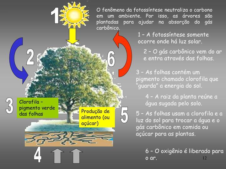 O fenômeno da fotossíntese neutraliza o carbono em um ambiente. Por isso, as árvores são plantadas para ajudar na absorção do gás carbônico.
