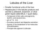 lobules of the liver