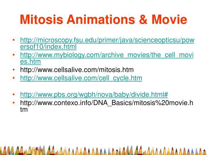Mitosis animations movie
