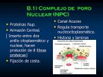 b 1 complejo de poro nuclear npc