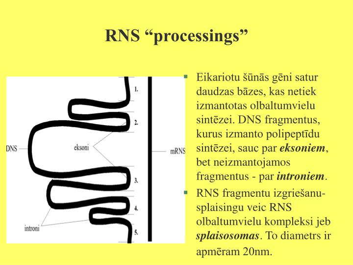 "RNS ""processings"""