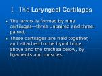 the laryngeal cartilages