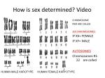 how is sex determined video