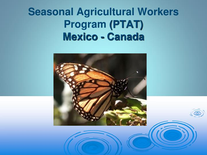 seasonal agricultural workers program ptat mexico canada n.