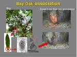 bay oak association