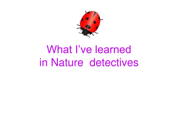 what i ve learned in nature detectives n.
