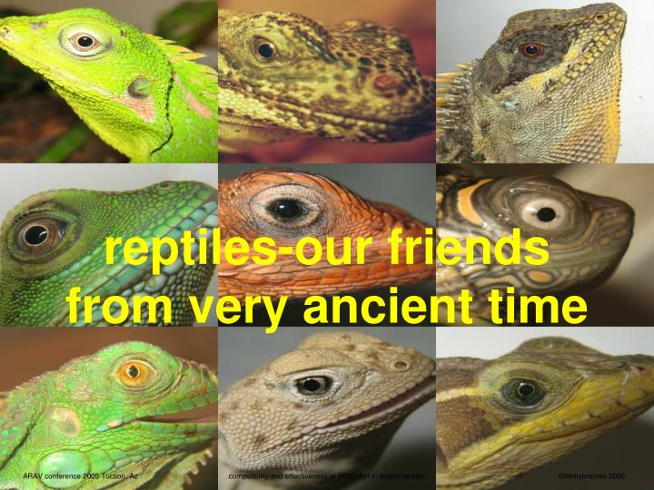 reptiles our friends from very ancient time n.