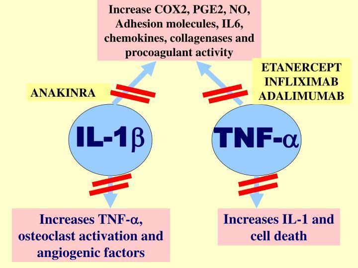 Increase COX2, PGE2, NO, Adhesion molecules, IL6, chemokines, collagenases and procoagulant activity