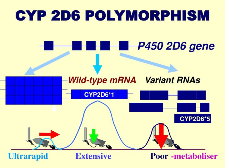 CYP2D6*5