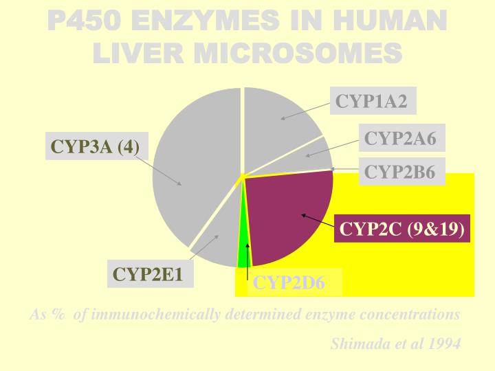 P450 ENZYMES IN HUMAN LIVER MICROSOMES