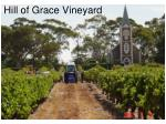 hill of grace vineyard