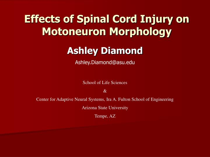 effects of spinal cord injury on motoneuron morphology n.
