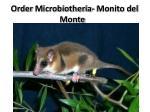 order microbiotheria monito del monte