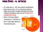 vidni ivec n opticus