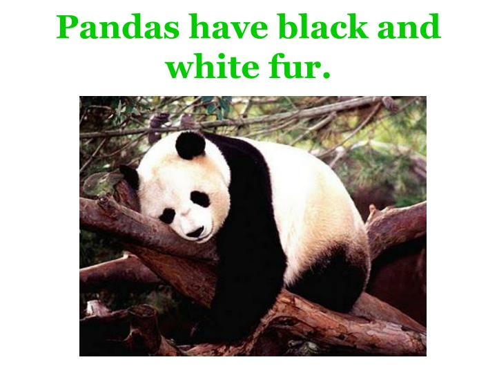 Pandas have black and white fur.