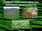 gambar pengaruh manusia terhadap biodiversitas