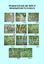 persentase rumput disekitar tanaman