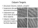 calpain targets