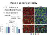 muscle specific atrophy1