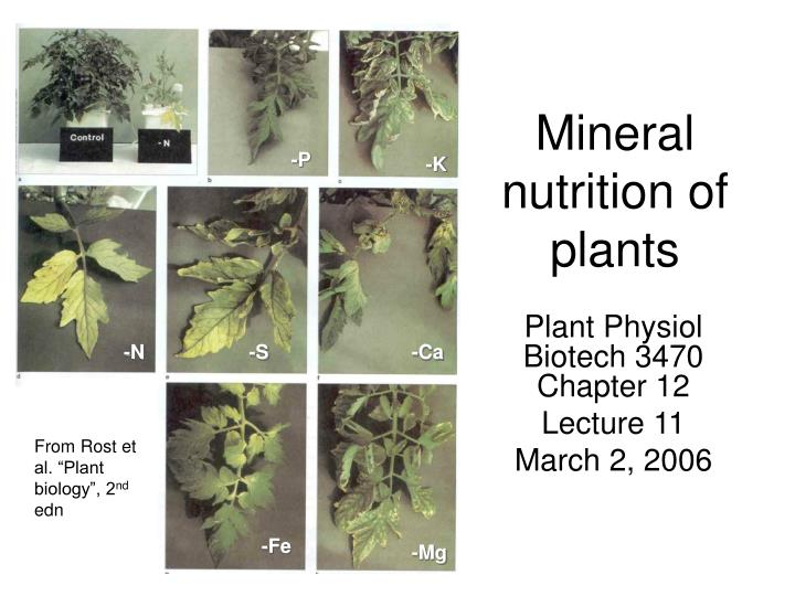 mineral nutrition of plants n.