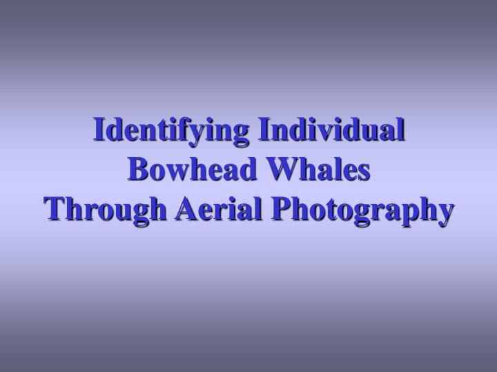 identifying individual bowhead whales through aerial photography n.