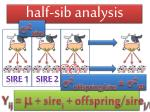 half sib analysis