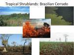 tropical shrublands brazilian cerrado