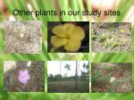 other plants in our study sites