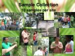 sample collection