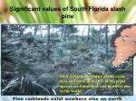significant values of south florida slash pine