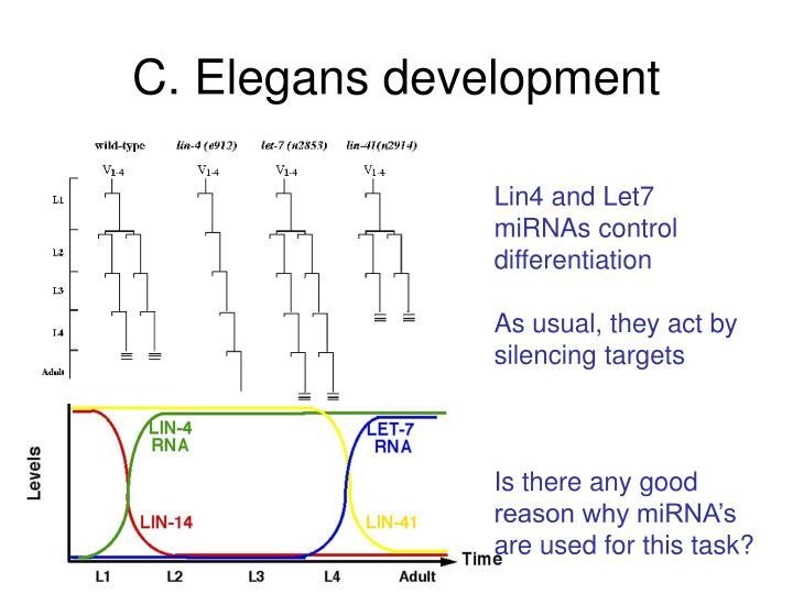 C. Elegans development