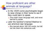 how proficient are other animals at language
