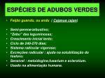 esp cies de adubos verdes4