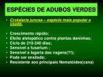 esp cies de adubos verdes5