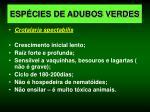 esp cies de adubos verdes6