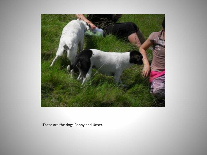 These are the dogs Poppy and