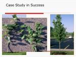 case study in success
