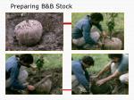 preparing b b stock