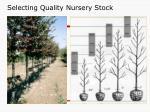 selecting quality nursery stock