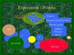 experiment projekt