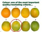 colour one of the most important quality marketing criteria