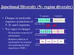 junctional diversity n region diversity