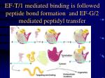 ef t 1 mediated binding is followed peptide bond formation and ef g 2 mediated peptidyl transfer
