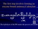 the first step involves forming an enzyme bound aminoacyl adenylate