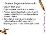 sumsum ginjal medula renalis