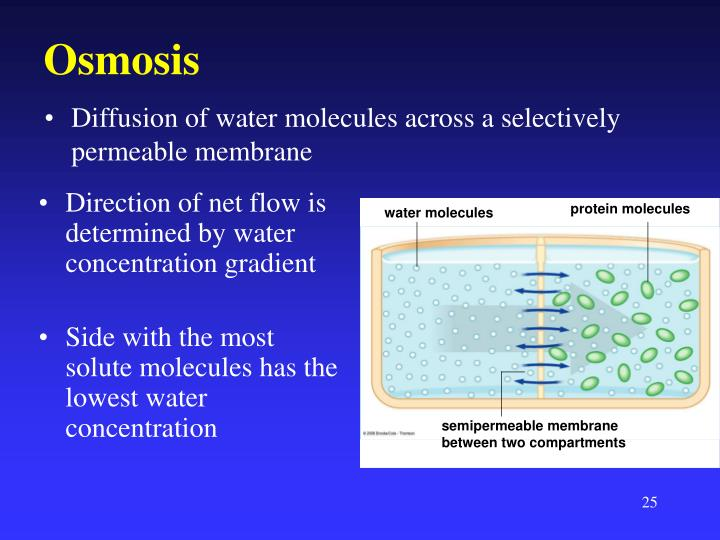investigating diffusion of molecules across a Quizzes science nature diffusion simple diffusion quiz simple diffusion quiz 5 questions gas or water molecules across a membrane 2.