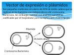 vector de expresi n o pl smidos
