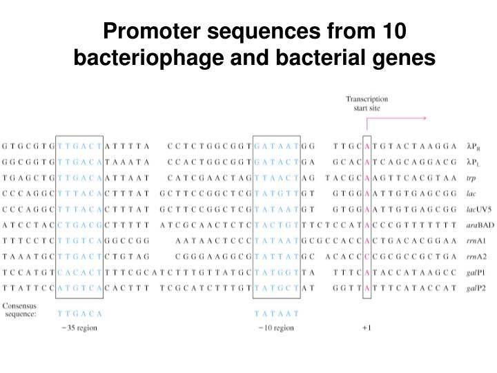 promoter sequences from 10 bacteriophage and bacterial genes n.