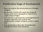proliferative stage of development