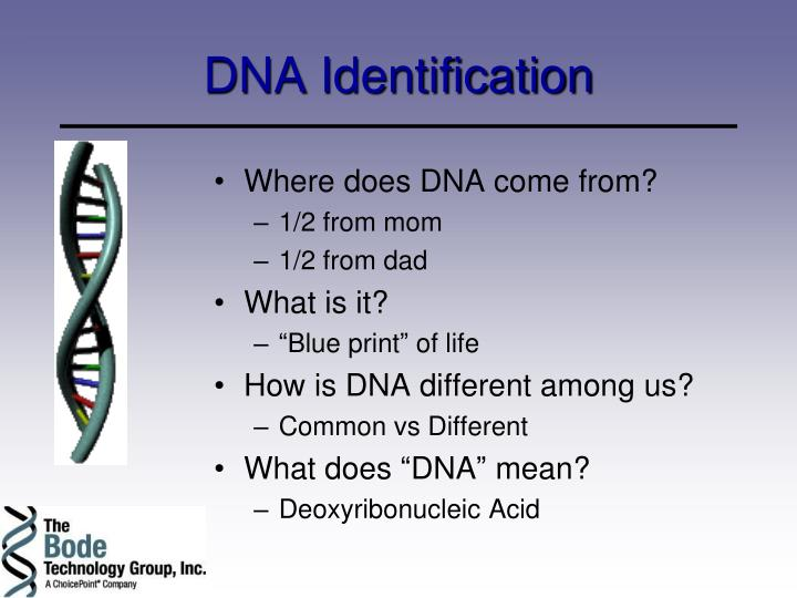 dna identification n.